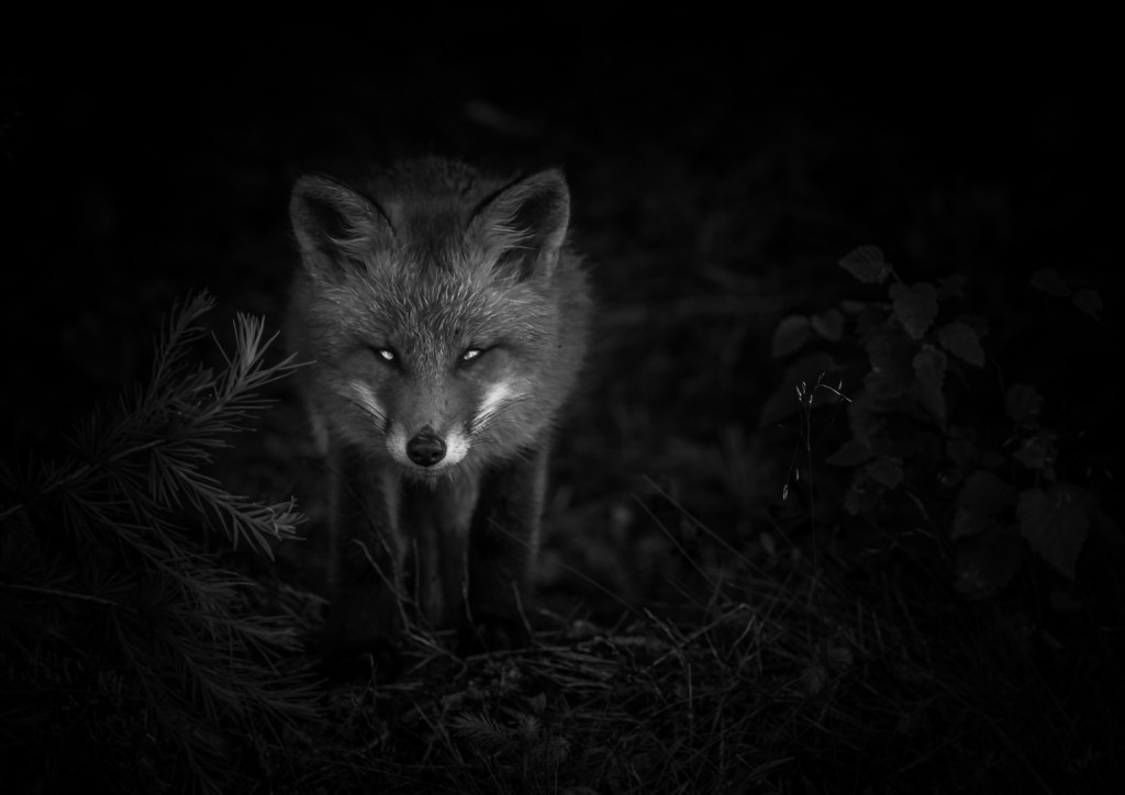 Foto: Henry Fredriksson